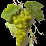 ¿Las uvas pueden ser consumidas por personas diabéticas?